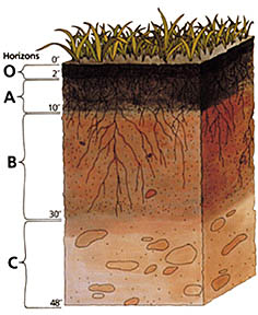 USDA soil profile - from http://en.wikipedia.org/wiki/Soil_horizons